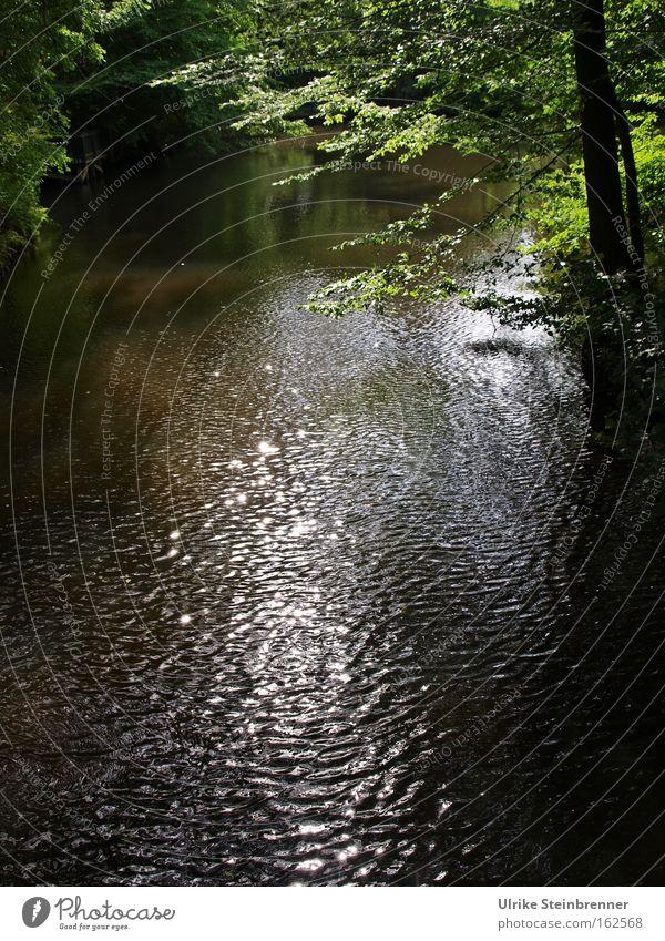 Oase Natur Wasser Baum grün ruhig Blatt Einsamkeit Erholung Bewegung Park braun Wellen glänzend Pause Fluss Frieden