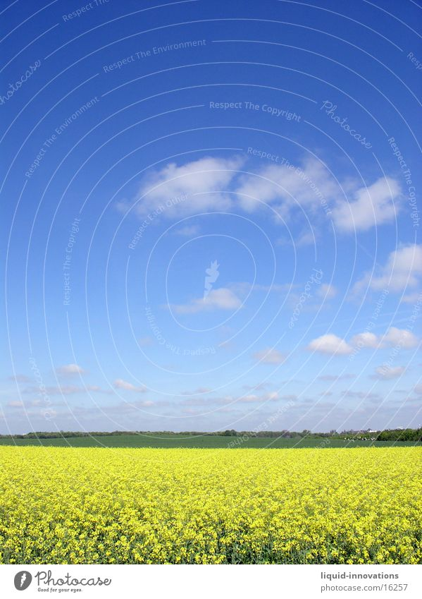 Rapsfeld im Mai I Himmel Wolken gelb Frühling Horizont