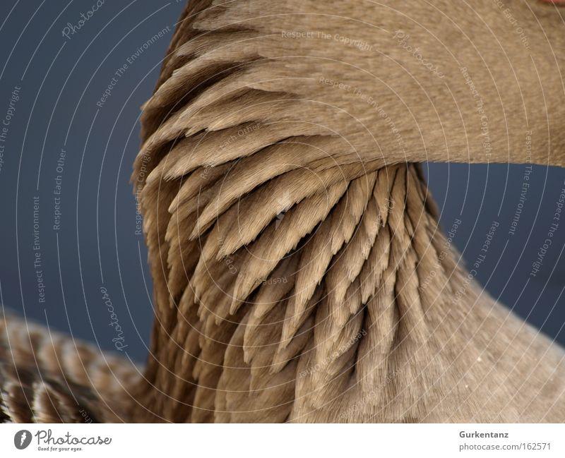 Trockener Hals Gans Tier Feder Detailaufnahme schön Vogel Bildschirmschoner Hintergrundbild Park Graugans Strukturen & Formen Makroaufnahme Nahaufnahme