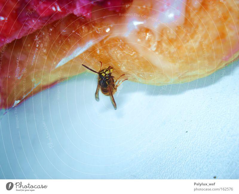Wespengeschmack Natur Sommer Ernährung Tier fliegen Flügel Insekt lecker Zucker Diebstahl Stachel Marmelade