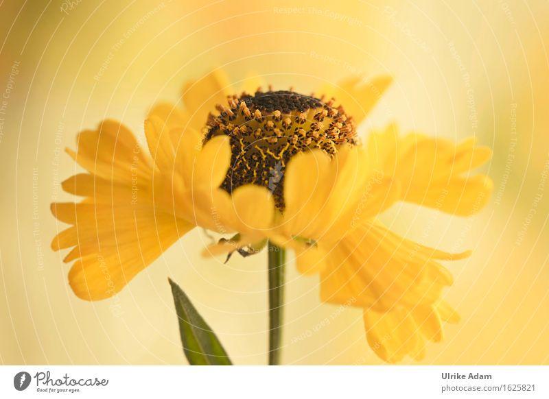 Blütentanz Kunst Kunstwerk Pflanze Sommer Blume Sonnenbraut Stauden Garten Park Blumenstrauß Blühend Duft leuchten exotisch frisch wild weich gelb Gefühle