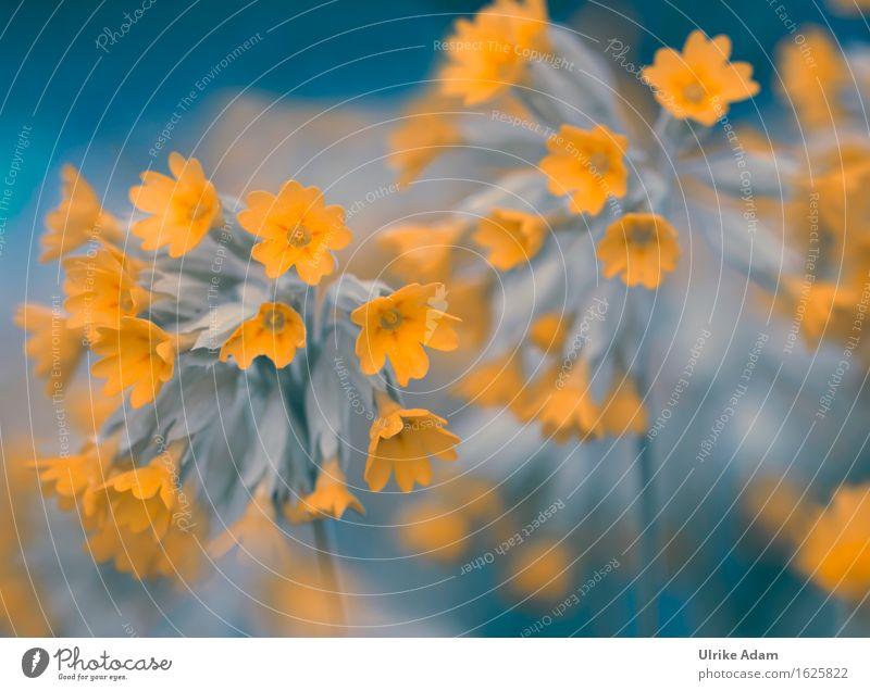 Echte Schlüsselblume (Primula veris) Garten Dekoration & Verzierung Kunst Printmedien Natur Pflanze Frühling Blume Blüte Wildpflanze Echte Schüsselblume