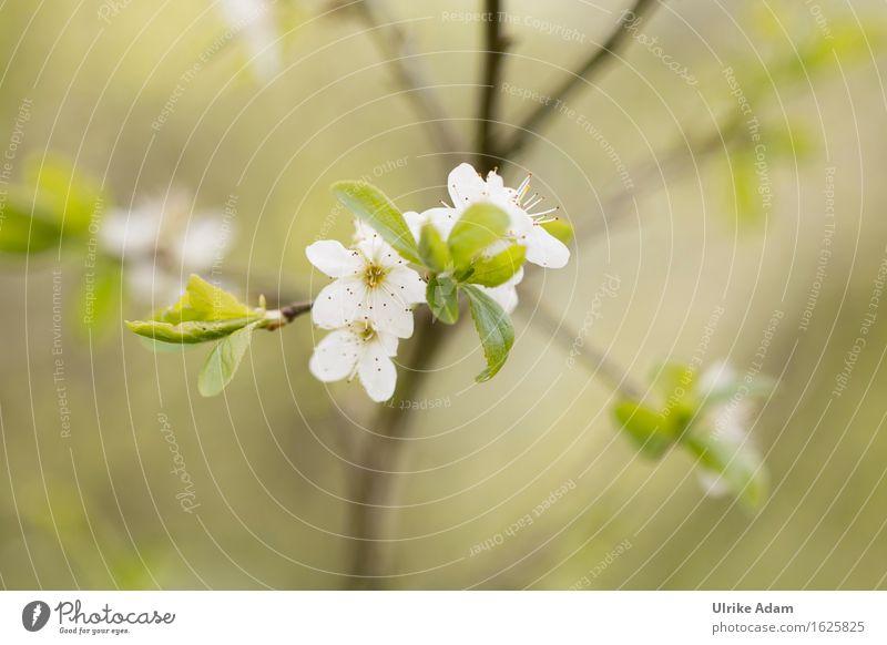 Frühlingserwachen Natur Pflanze grün weiß Baum Blatt Blüte Gefühle Garten außergewöhnlich Stimmung wild Zufriedenheit frisch leuchten