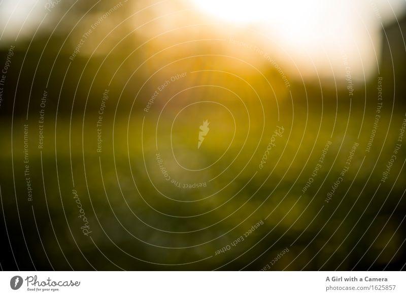 impressions Natur Landschaft Pflanze Schönes Wetter Baum Gras Feld gelb gold grün Andeutung Sonnenuntergang Eindruck Gedeckte Farben Außenaufnahme Experiment