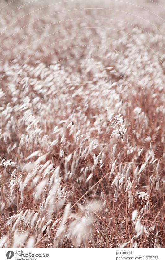 Wind I Landschaft Kunst Feld Wachstum ästhetisch weich Landwirtschaft Getreide reif Getreidefeld Landschaftsformen dezent anbauen