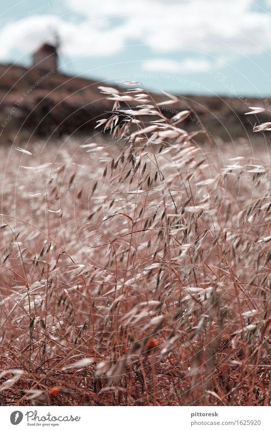 Wind III Kunst Kunstwerk ästhetisch Feld Getreide Getreidefeld Getreideernte Mühle Idylle Sommer Sommerurlaub wehen Windstille Spanien Farbfoto Gedeckte Farben