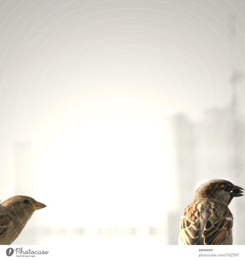futterneid Tier Vogel Flügel Fressen Schnabel Konkurrenz Futter Spatz Verhalten egoistisch Singvögel Sonnenblumenkern Futterneid