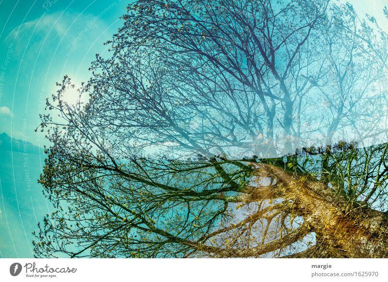 Baumweg Ferien & Urlaub & Reisen Umwelt Natur Landschaft Himmel Sonne Frühling Grünpflanze Nutzpflanze Wald wandern Gesundheit gigantisch blau grün Abenteuer