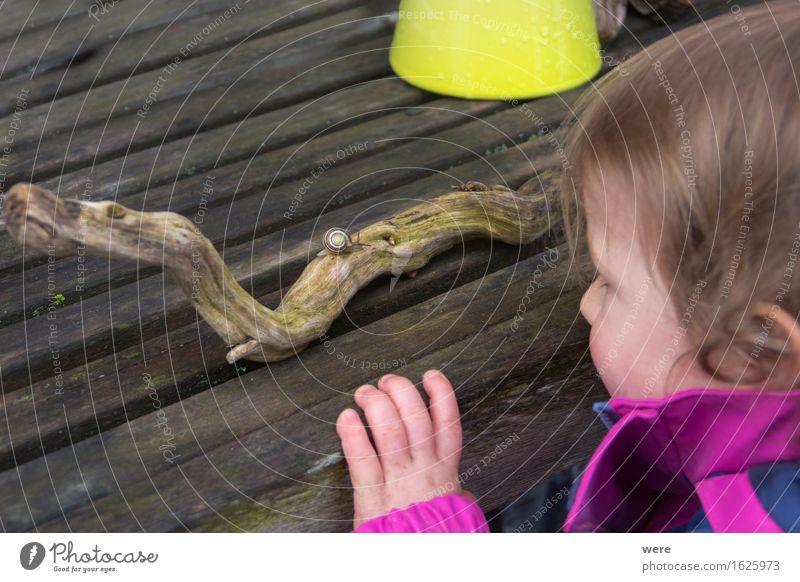 Begegnung Mensch Kind Natur Tier Neugier Ereignisse krabbeln zielstrebig schleimig Schneckenhaus Naturliebe Naturwunder Waldkindergarten