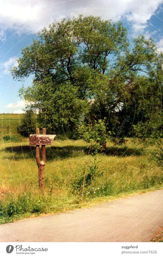 Baum_1 Wiese Schilder & Markierungen Natur Wege & Pfade