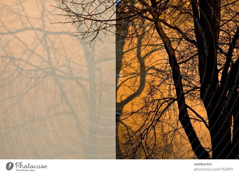 Dämmerung Baum Baumstamm Ast Zweig Herbst Wand Haus Gebäude Mauer Brandmauer Sonnenuntergang Schatten Jahreszeiten