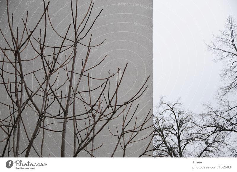 zweimal Baum Winter Wand grau Mauer Sträucher Ast Zweig Gefäße trüb verzweigt