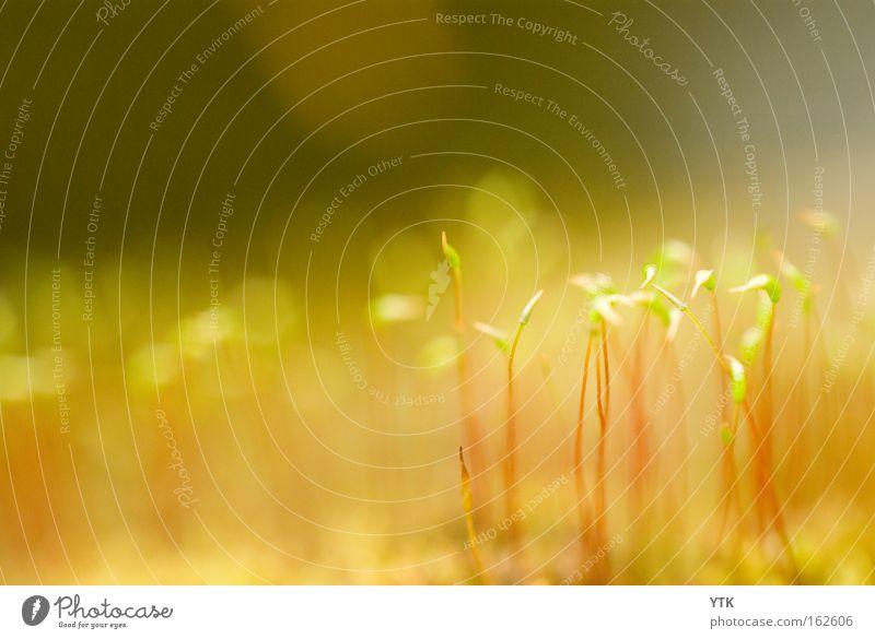 Zarte Triebe Umwelt Natur Pflanze Frühling Gras Grünpflanze Nutzpflanze Wildpflanze Garten Wiese Wachstum Botanik Ursprung zart Blütenstiel Kresse Moosteppich