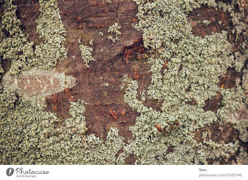Where the moss slowly grows Natur Pflanze grün Baum Herbst braun Wachstum trocken Moos Baumrinde Flechten