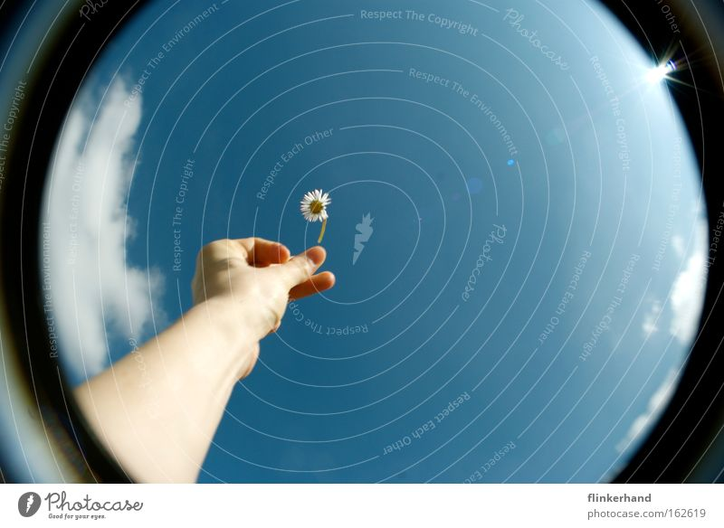 fang das blümchen! Gänseblümchen Hand strecken fangen greifen werfen Wolken Himmel blau Freiheit Sommer Sonne Freude Glück Fischauge