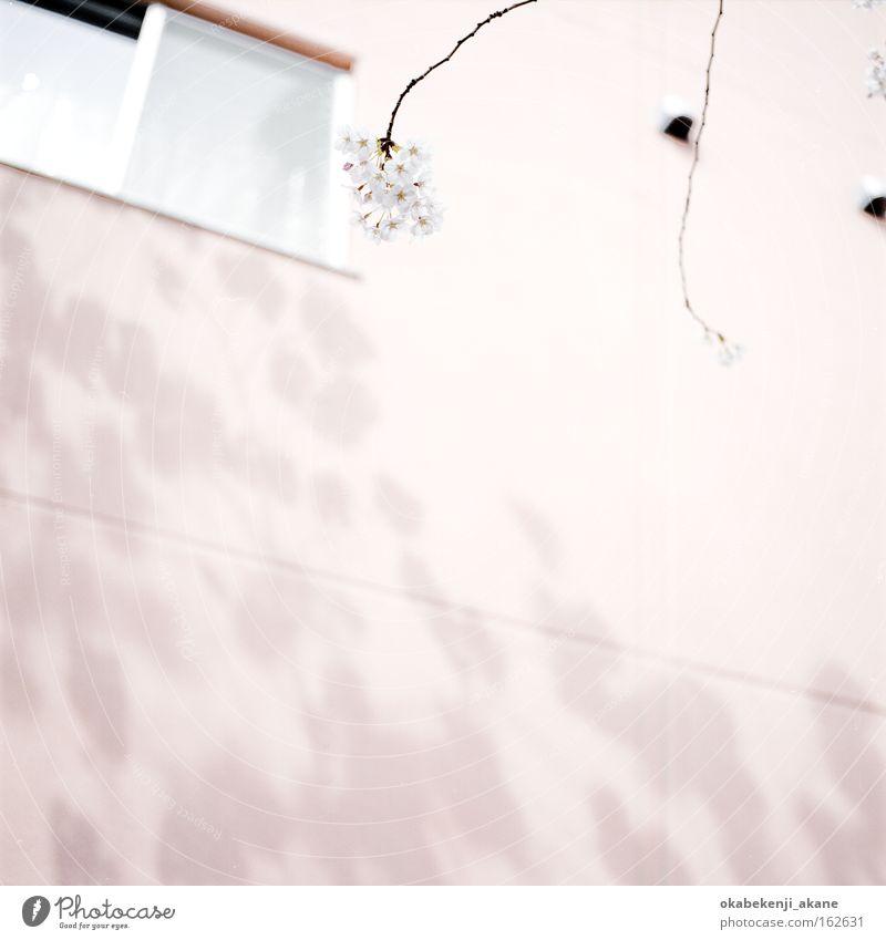 weiß Blume Luft rosa Filmindustrie Quadrat Japan Tokyo Kirschblüten Stimmungsbild