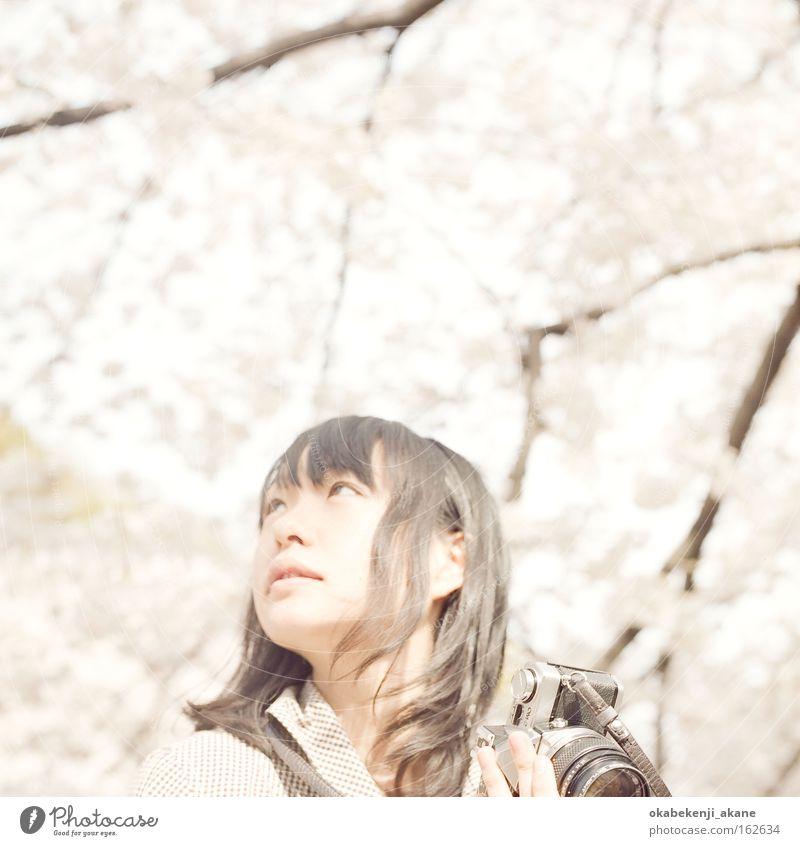 weiß Blume Luft rosa Filmindustrie Quadrat Japan Asien Tokyo Kirschblüten Stimmungsbild