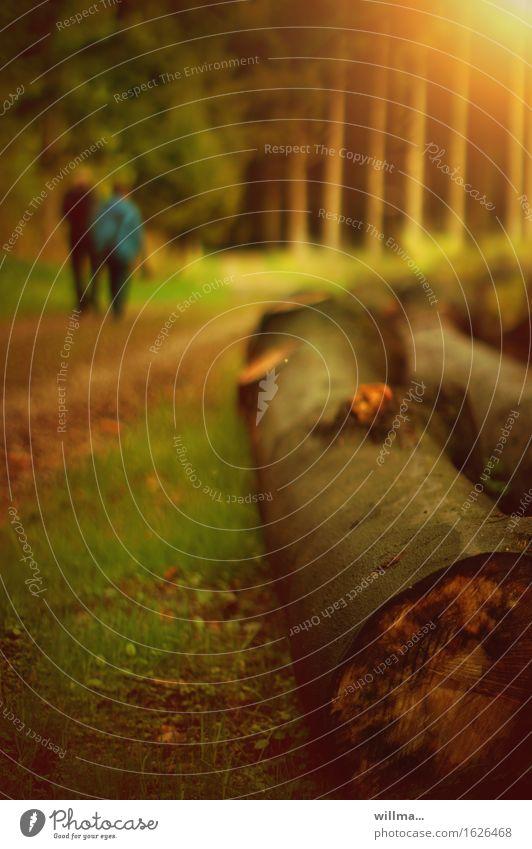 baum gefällt. bild auch? Freizeit & Hobby Waldspaziergang wandern Spaziergang Landwirtschaft Forstwirtschaft Paar Baumstamm Abholzung Natur Ausflug Farbfoto
