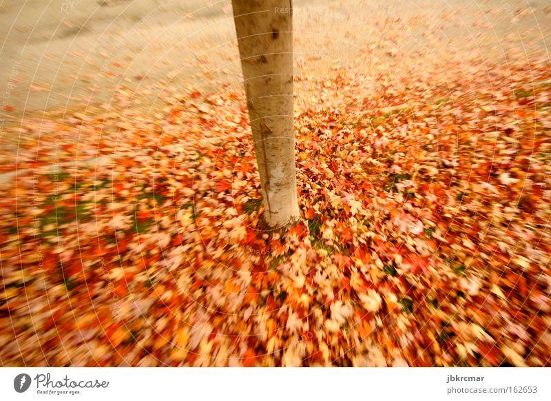 Autumn leaves Herbst Natur Blatt mehrfarbig Baum rot Baumstamm Romantik Bürgersteig poetisch laubhaufen Traurigkeit