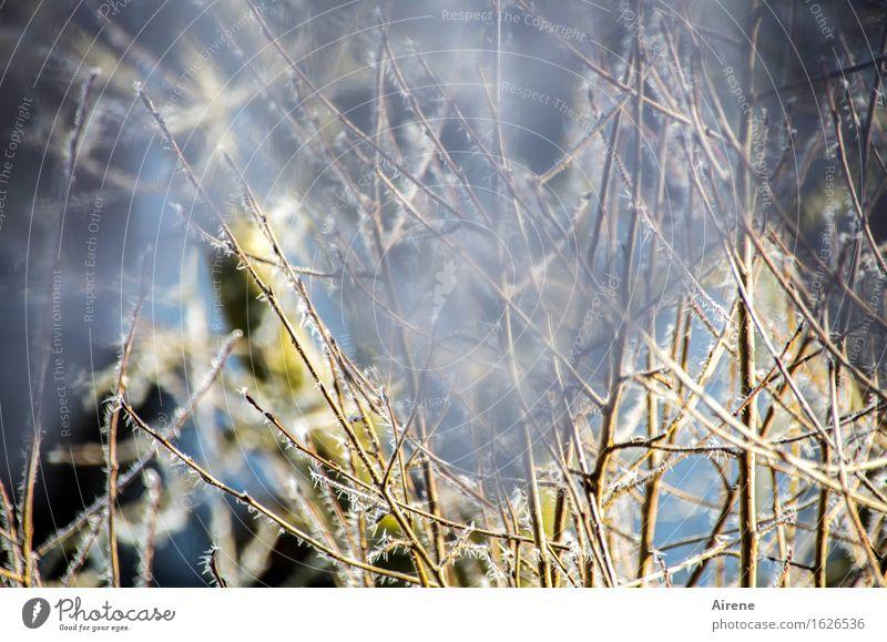 Tlön | ist mir schleierhaft blau weiß Baum Winter kalt Schnee Garten grau Vorhang Spitze Fensterblick Gardine Durchblick unklar Zacken Zweige u. Äste