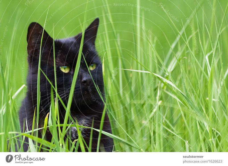 Hans-Georg Freizeit & Hobby Jagd Tier Haustier Katze 1 beobachten Erholung genießen hocken kämpfen sitzen bedrohlich Erfolg kuschlig listig Neugier rebellisch