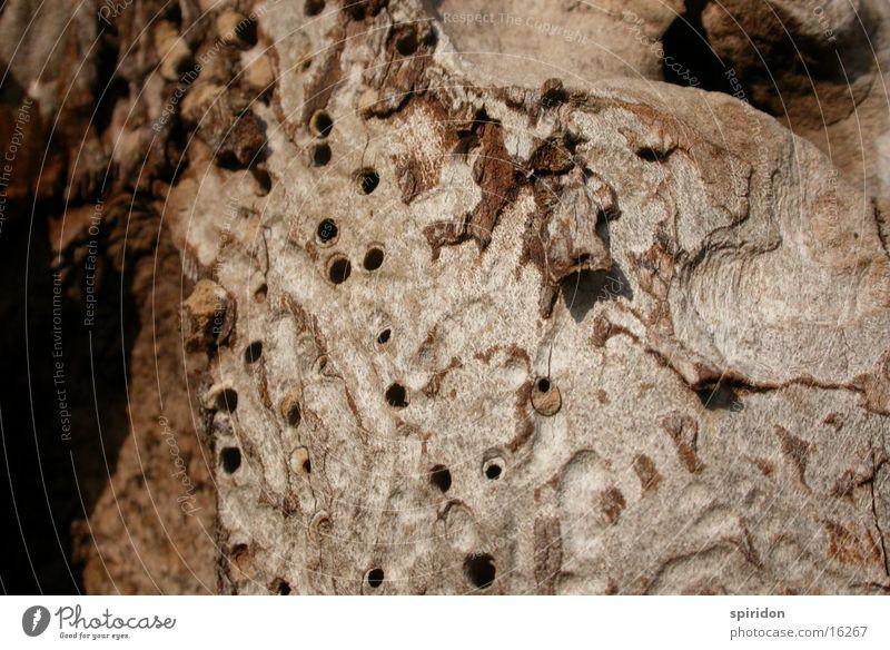 Termitenwerk Baum Holz Loch Baumrinde Baumstamm