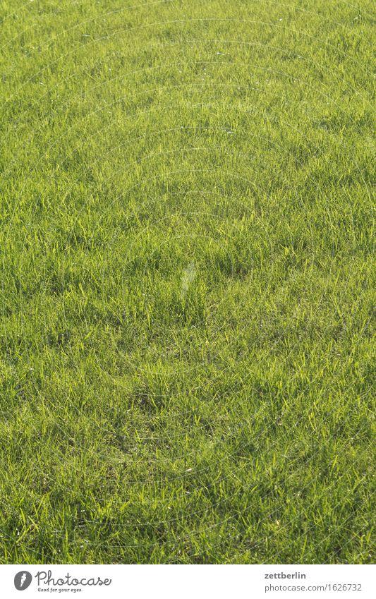 Simply Green grün Sommer Frühling Wiese Gras Hintergrundbild Sport Garten Textfreiraum Rasen Weide Sportrasen Haarschnitt Vorstadt Durchschnitt Bieder