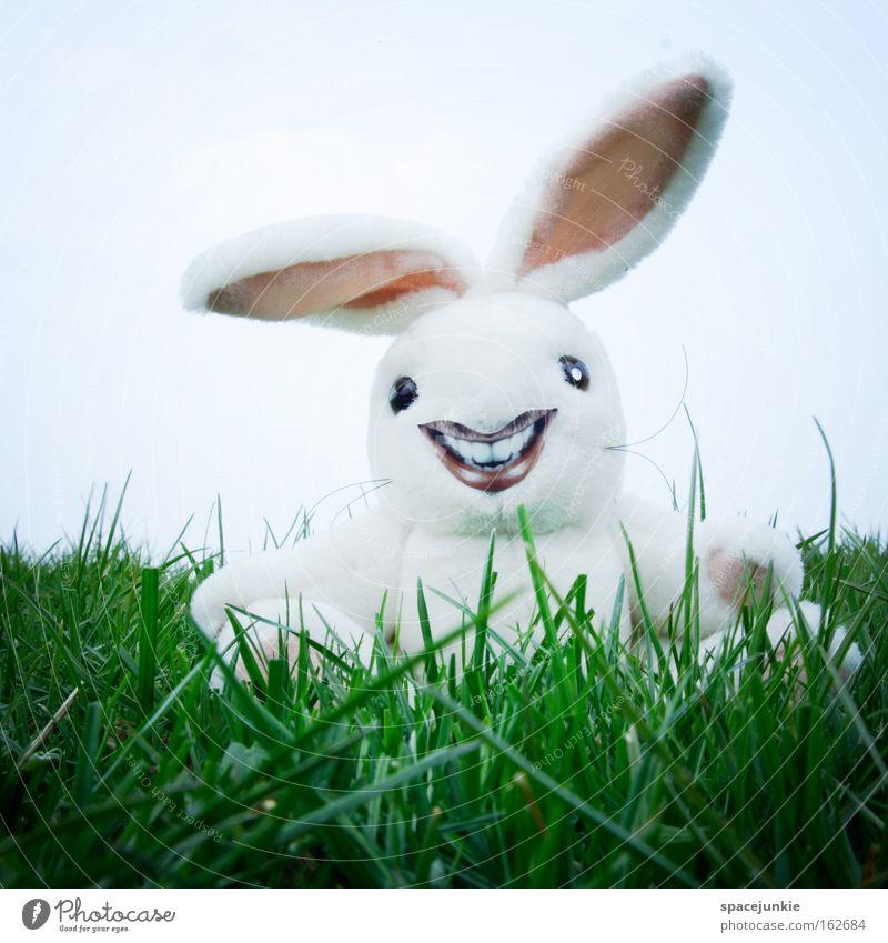 Freaky rabbit Freude Gras lachen verrückt Rasen Ohr Ostern Hase & Kaninchen Nest Osterei