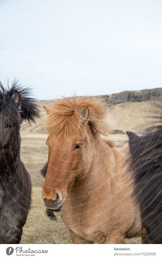 rest pferdchen. Freizeit & Hobby Reiten Ferien & Urlaub & Reisen Tourismus Ausflug Abenteuer Ferne Freiheit Expedition Umwelt Natur Island Tier Pferd