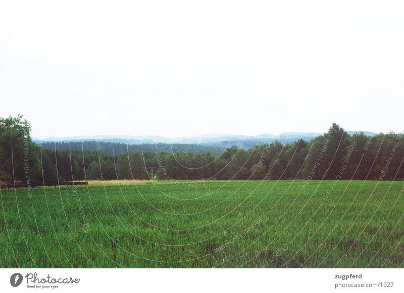 Ausblick Sauerland Wiese Aussicht Wald Natur