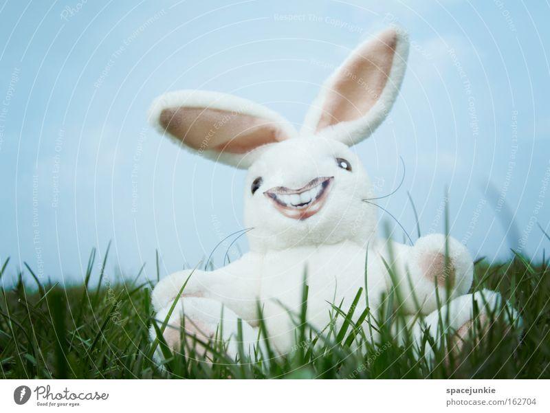 Zum Totlachen Freude Gras lachen verrückt Rasen Ohr Ostern Hase & Kaninchen Nest Osterei