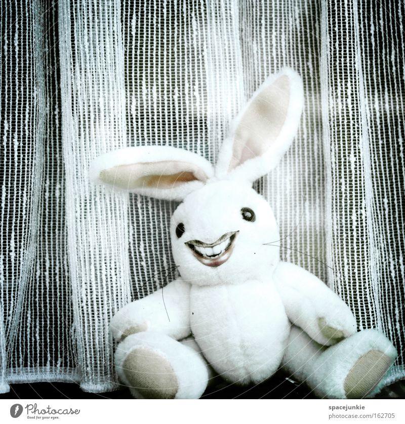 Waiting Freude lachen verrückt Ohr Ostern Hase & Kaninchen Freak Gardine Versteck Osterei