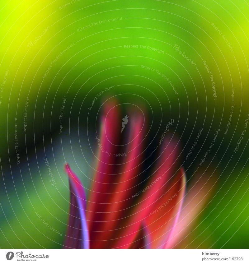 farbflash Natur Blume Pflanze Farbe Leben Stil Blüte Frühling Hintergrundbild Design frisch ästhetisch Coolness Kitsch Dekoration & Verzierung natürlich