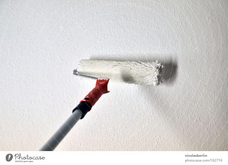 Wildcat streichen Farbe Maler weiß Aktion Handwerk Langeweile rollern malern malerrolle malermeister white paint move Umzug (Wohnungswechsel) Raum room neu Wand