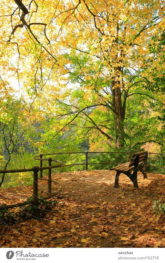 Herbstlicht Baum Blatt Wald Erholung Park Bank