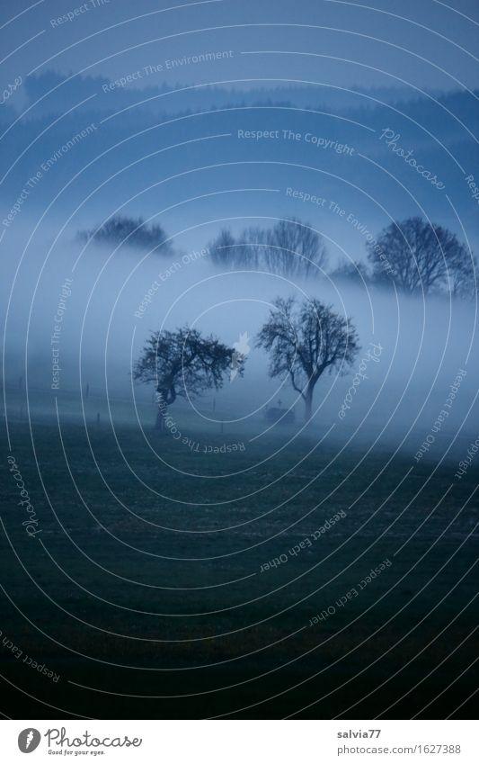 Herbststimmung im Mai Ferien & Urlaub & Reisen Umwelt Natur Landschaft Himmel Wolken Frühling Klima Wetter schlechtes Wetter Nebel Feld Wald hängen wandern