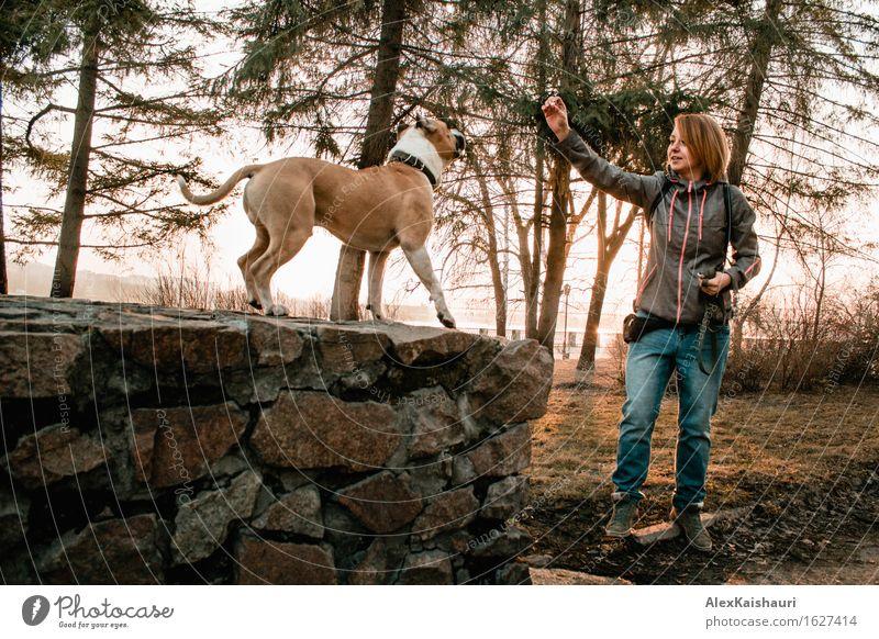 Junge Frau bildet ihren Hund am Abendpark aus. Mensch Natur Ferien & Urlaub & Reisen Jugendliche Sommer Baum Tier Freude 18-30 Jahre Erwachsene Umwelt Frühling