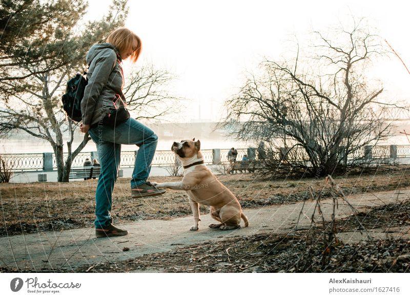 Junge Frau bildet ihren Hund am Abendpark aus. Mensch Natur Ferien & Urlaub & Reisen Jugendliche Sommer Sonne Landschaft Tier Freude 18-30 Jahre Erwachsene