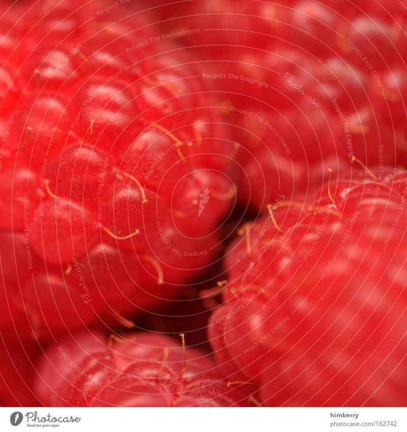 berry him rot Gesundheit Frucht natürlich Lebensmittel frisch Ernährung Lifestyle süß rund Leidenschaft lecker Süßwaren Bioprodukte Beeren Dessert