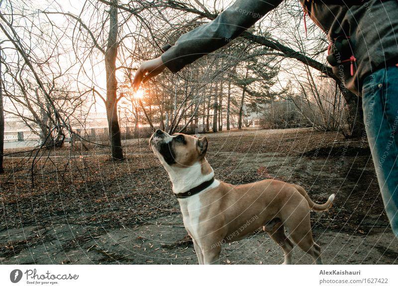 Junge Frau spielt mit ihrem Hund am Abendpark. Mensch Natur Ferien & Urlaub & Reisen Jugendliche Stadt Sommer Sonne Baum Tier Freude 18-30 Jahre Erwachsene