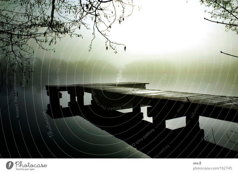 steg See Gewässer Natur Landschaft Steg Anlegestelle Holz Horizont Küste Seeufer Geäst Reflexion & Spiegelung Gegenlicht Nebel Stimmung Morgen Wasser ruhig