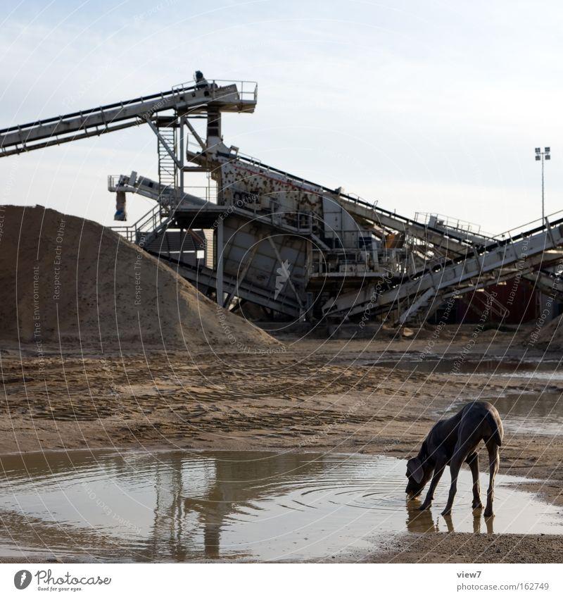 Trinktier Wasser Hund Lebensmittel Sand See Zufriedenheit Pause Industrie trinken Industriefotografie Dorf Säugetier Pfütze Aktien Durst Haufen