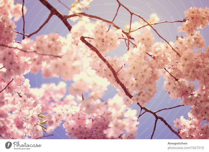 ::16-18:: Umwelt Natur Pflanze Tier Sonne Frühling Sommer Klima Wetter Schönes Wetter Baum Blume Blatt Blüte Nutzpflanze Wildpflanze Garten Park ästhetisch