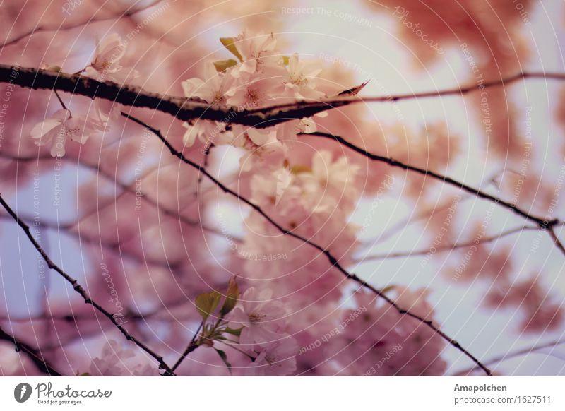 ::16-22:: Natur Ferien & Urlaub & Reisen Pflanze Sommer Sonne Baum Blume Erholung Blatt ruhig Leben Frühling Blüte Garten Tourismus Zufriedenheit