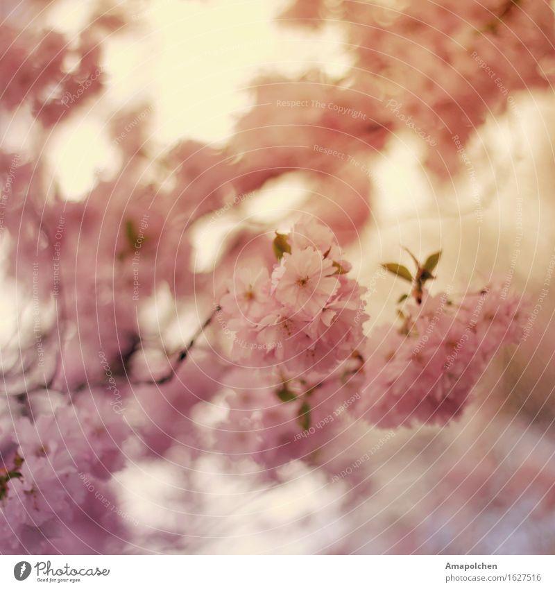 ::16-23:: Natur Pflanze Sommer Baum Blume Erholung ruhig Leben Frühling Blüte Garten Park Zufriedenheit Wetter ästhetisch Klima