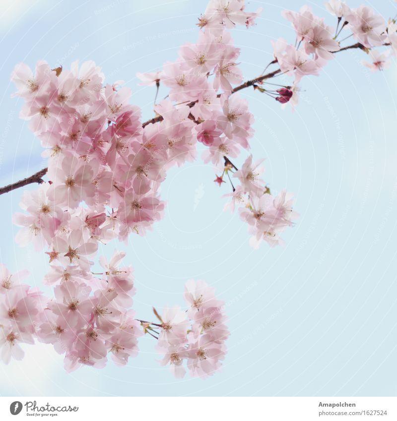 ::16-19:: Umwelt Natur Landschaft Pflanze Sonne Frühling Sommer Klima Wetter Schönes Wetter Baum Blume Blatt Blüte Nutzpflanze Wildpflanze Garten Park