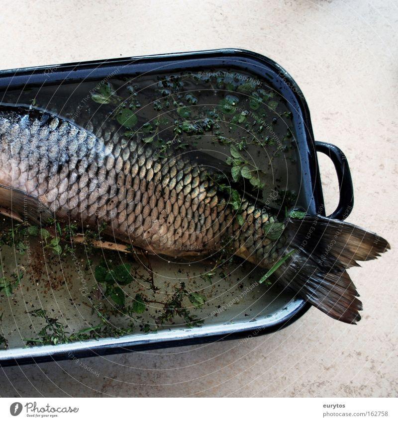 Fisch zu Karfreitag Ernährung Pfanne grau grün Karpfen kochen & garen Farbfoto Innenaufnahme Nahaufnahme Textfreiraum rechts Textfreiraum unten Menschenleer