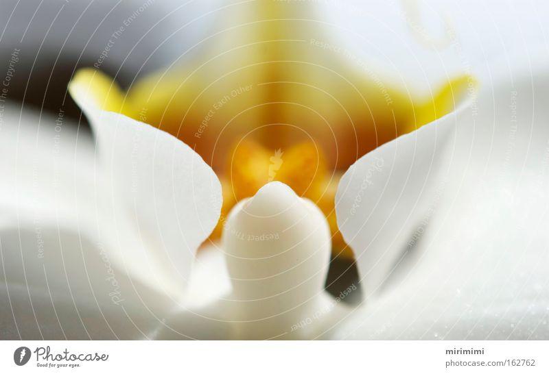 Orchidee weiß Pflanze gelb Blüte Frühling Köcher