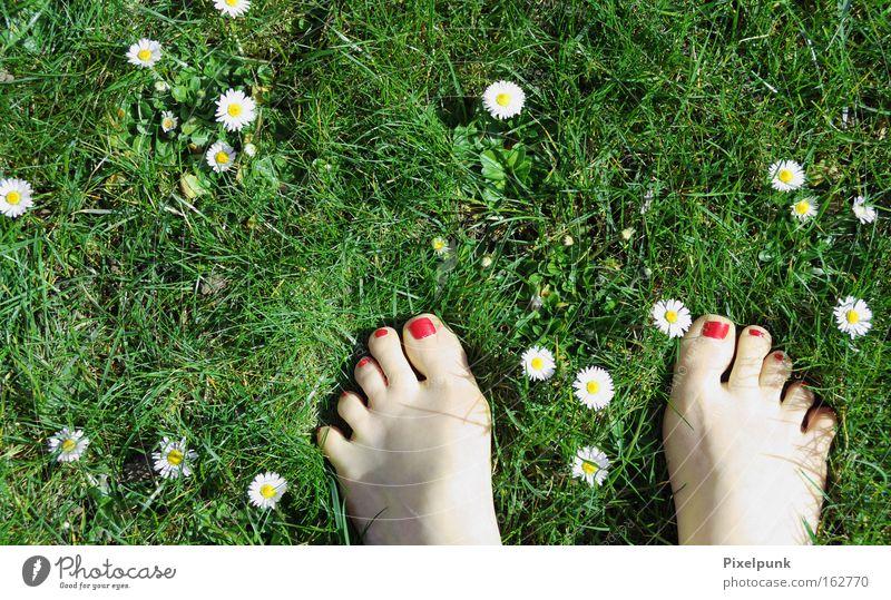 Gänsefüßchen Gras Gänseblümchen Frühling rot grün weiß Zehen Lack Barfuß Gefühle 10 Sommer Freude Fuß Kitzel liegen