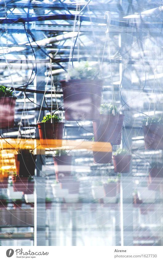 hängende Gärten blau weiß Blume außergewöhnlich Garten braun oben hell Metall Wachstum gold Glas hoch Kunststoff Handel